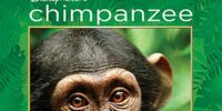 Chimpanzee (video)