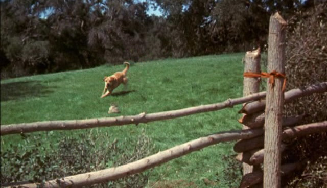 File:Old-yeller-disneyscreencaps.com-744.jpg
