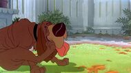 Tramp-disneyscreencaps com-2449
