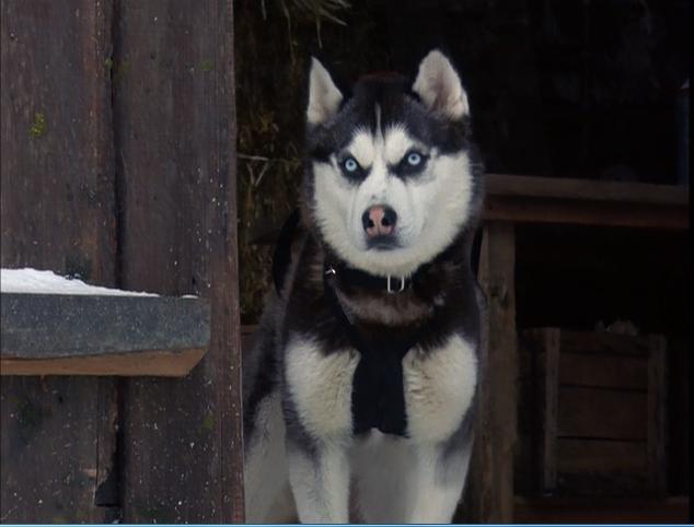 Snow Dogs - Movie News, Reviews, Recaps and Photos - TV.com