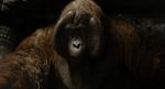 Jungle Book 2016 166