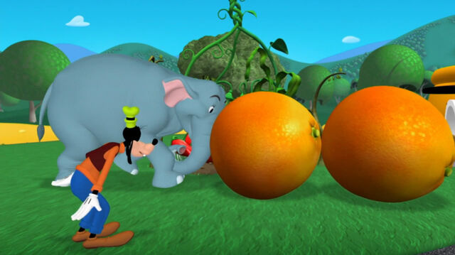 File:Elephant pushes two oranges.jpg