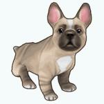 Pets - Dog Jacques