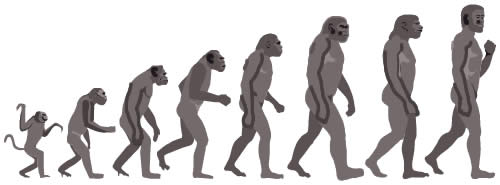File:Ape-to-man-evolution.jpg