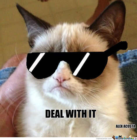 File:Grumpy-cat-deal-with-it o 1296093.jpg