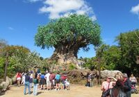05-tree-of-life-dak-500x351