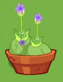 File:Potted Chirproot.jpg