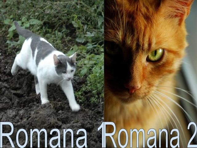File:Romana.jpg