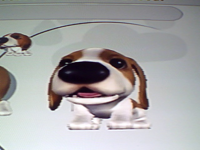 File:5 Soft Beagle.jpg