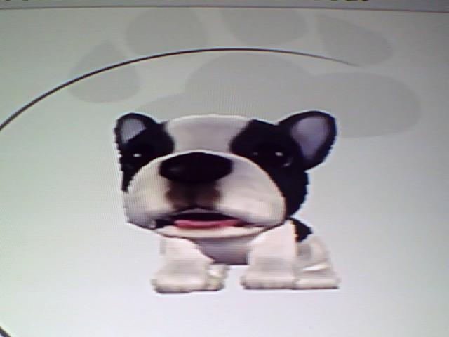 File:36 Tricolour French Bulldog.jpg