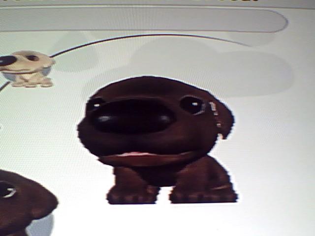 File:1 Brown Labrador.jpg