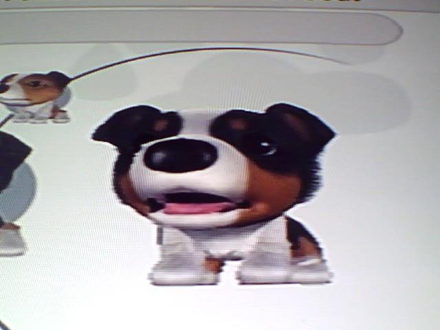 File:18 Tricolour Shetland Sheepdog.jpg