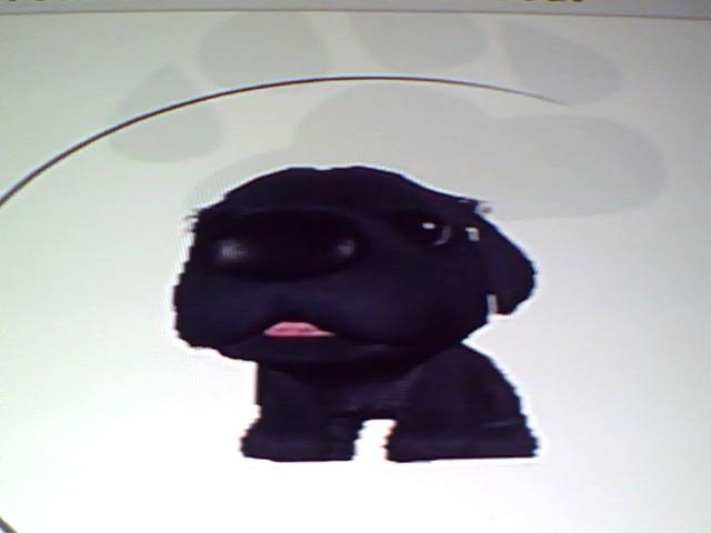 File:39 Black Newfoundland.jpg