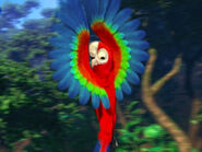 Mainpage-Navmap-Thumb-Red-and-green-Macaw