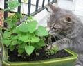 Kitten sniffing plants.jpg