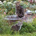 Cats in a garden.jpg