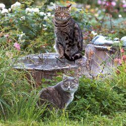 Cats in a garden