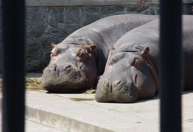 Plik:Zoo wroclaw 3.JPG