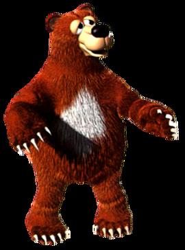 Bear (specie)