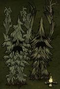 Tree Guards