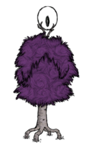Poison Birchnut Tree