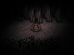Pumpkin Lantern night