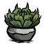 Potted Succulent.png