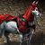 Mount crimson crusader