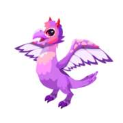 Lovebird Adult