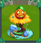 EggJackO'