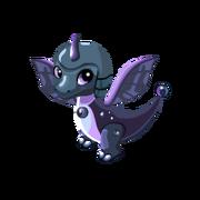 Black Pearl Juvenile