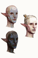 Inquisition Arlathan Elves concept 1
