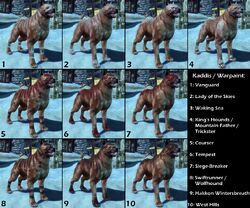 DAO Dog - Kaddis and Warpaint comparison.jpg