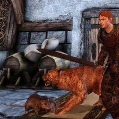 Sir Gilmore i pies walczą ze szczurami.