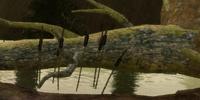 Rare Ironbark