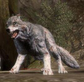 Creature-Wolf.jpg