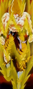 Pathos of Frieza - Goku enraged