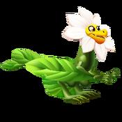Petal Dragon 3