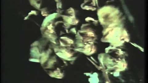 Vampire bat food sharing (explained by David Attenborough)