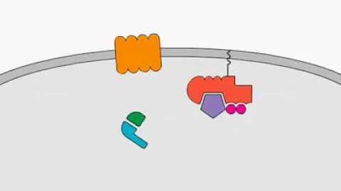 Chemokine Signaling
