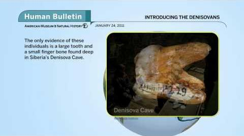 Science Bulletins Introducing the Denisovans