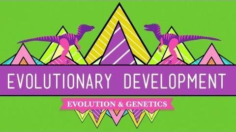Evolutionary Development Chicken Teeth - Crash Course Biology 17