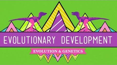 Evolutionary Development Chicken Teeth - Crash Course Biology 17