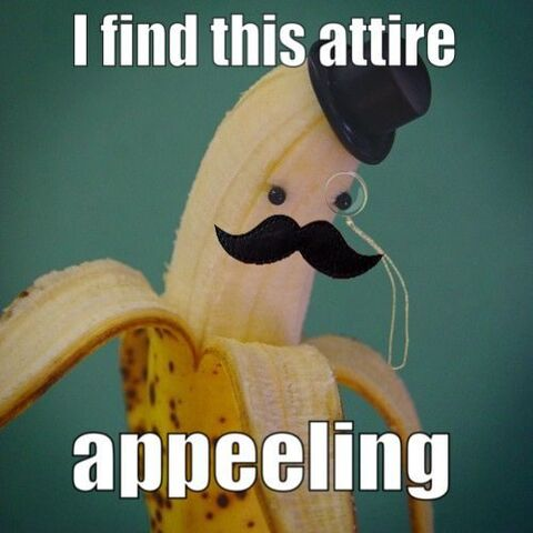 File:Funny-pun-photos-18.jpg