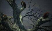 Dragon's Dogma - Harpies.jpg