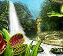 Krakesh Rainforest