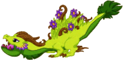 Meadow Dragon Adult