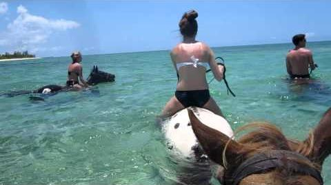 Pampered Ponies - Grand Cayman 5 30 11 (4)