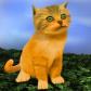 File:DW Kitten.png