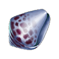 Coll shell blue shell